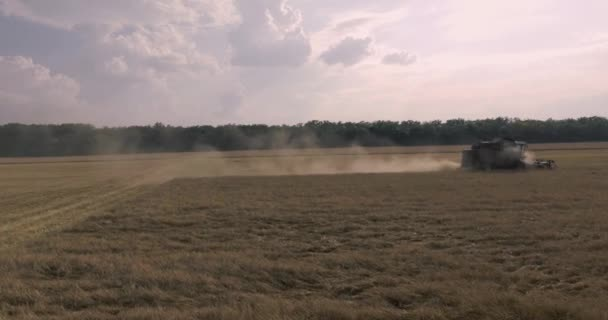 kombajn na poli pšenice