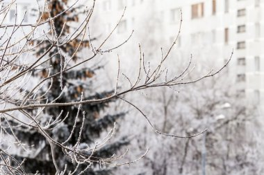 View from the window on the winter city and trees covered with snow