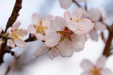 Beautiful flowering tree