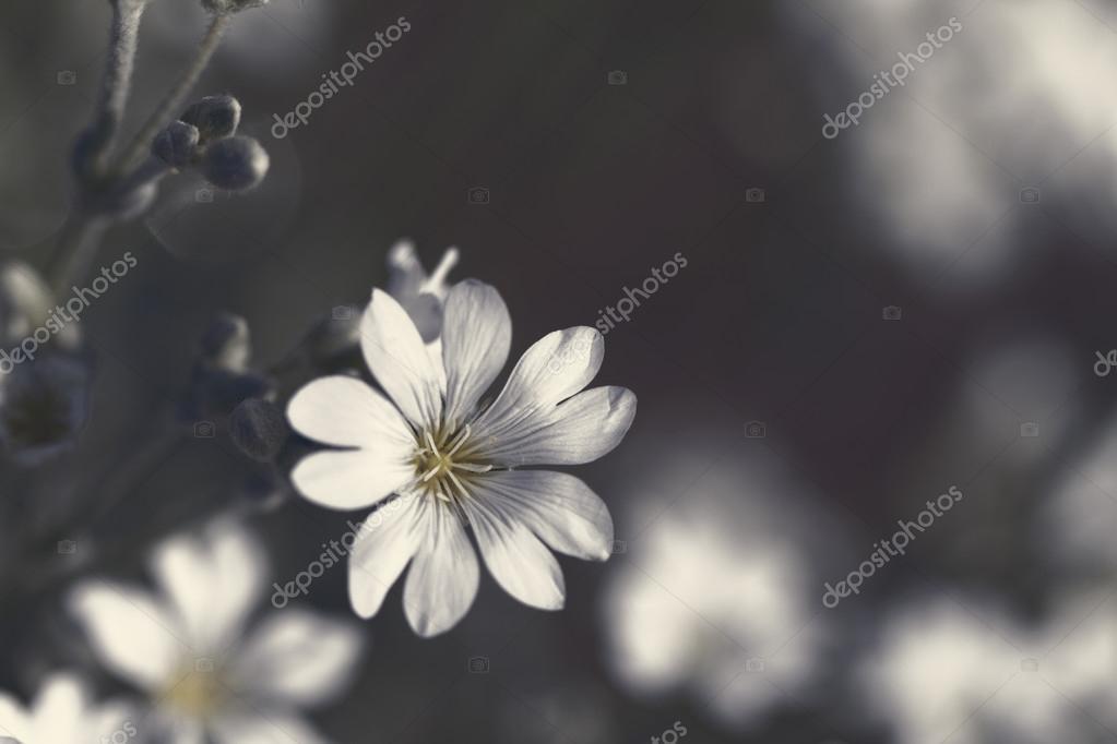 White rock flowers stock photo adrx 69820829 white rock flowers stock photo mightylinksfo