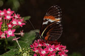 Krásný barevný motýl
