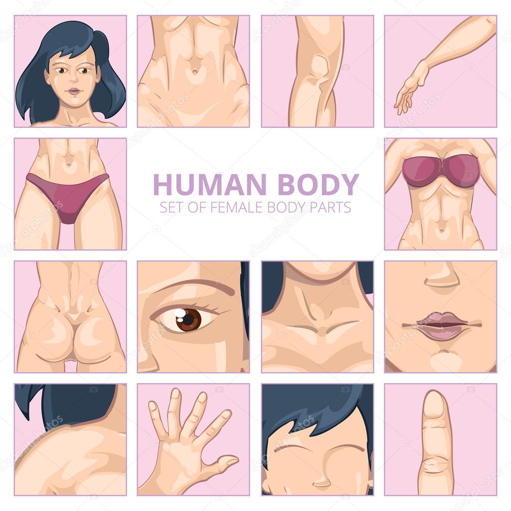 Partes del cuerpo femenino en estilo de dibujos animados. Conjunto ...