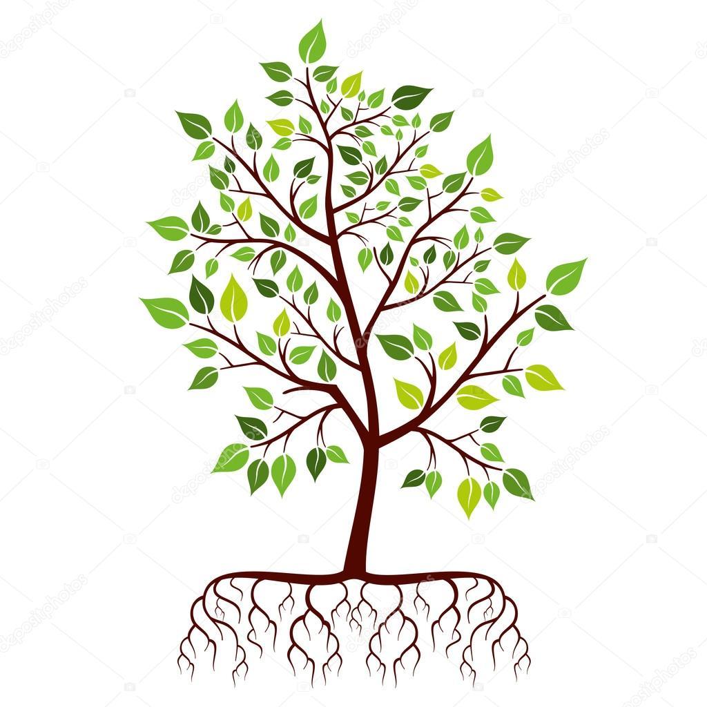 Árbol con raíces y hojas verdes archivo imágenes vectoriales