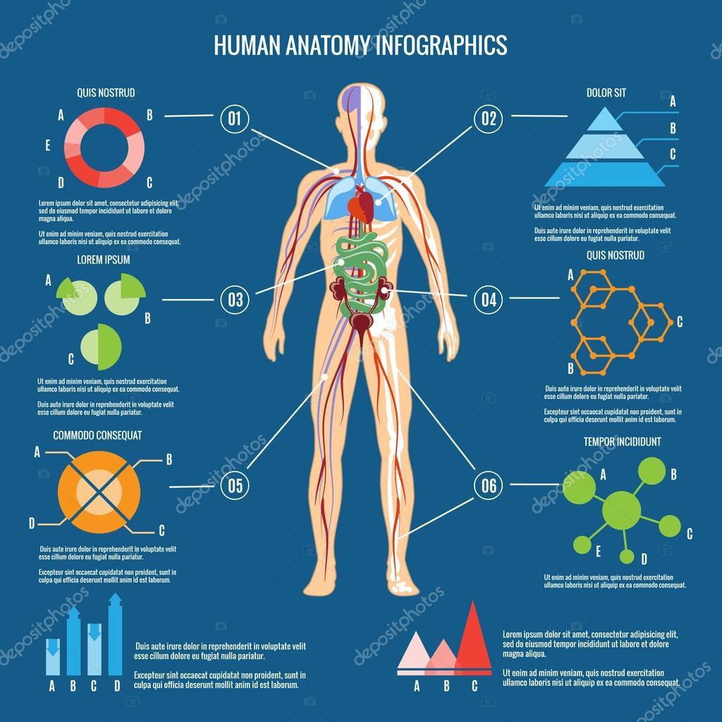 Menschlichen Krper Anatomie Infographik Design Stockvektor Mssa