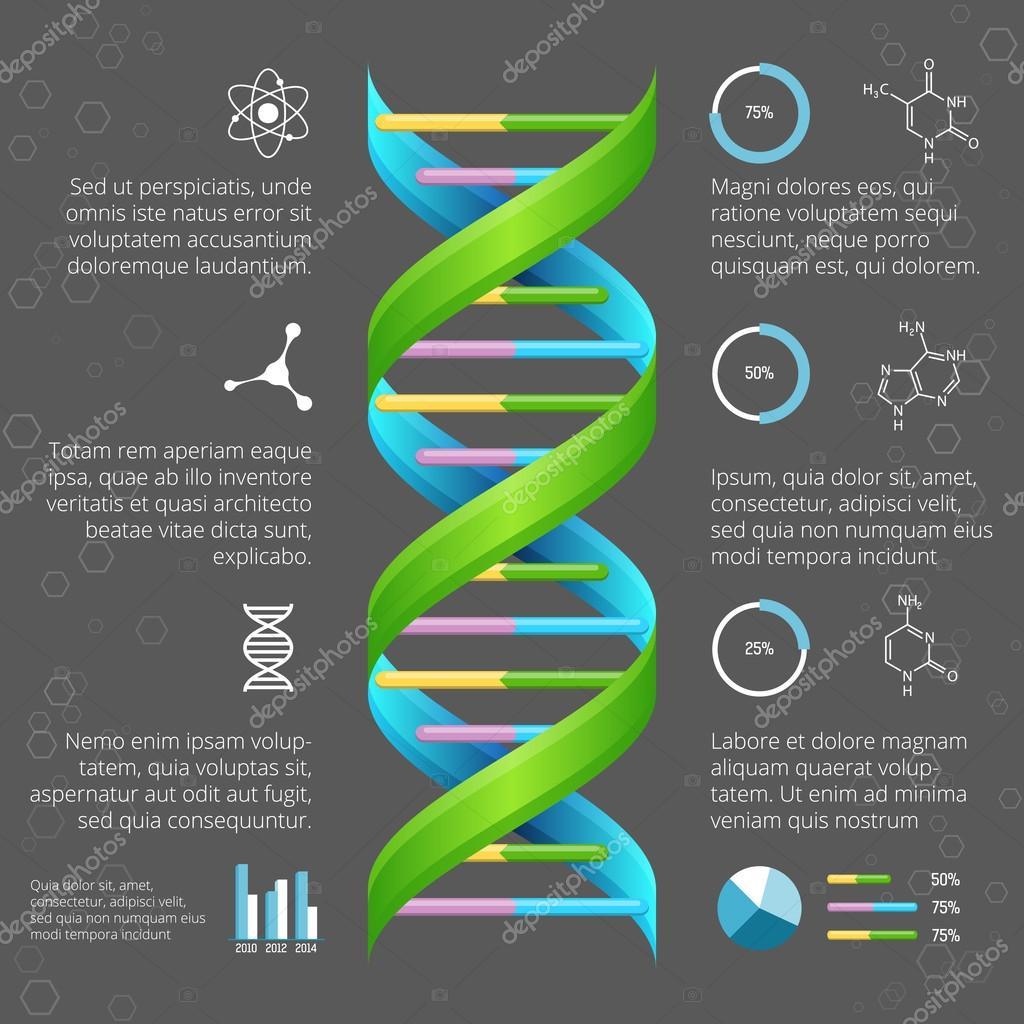 Plantilla de infografía con la estructura del ADN para la ...