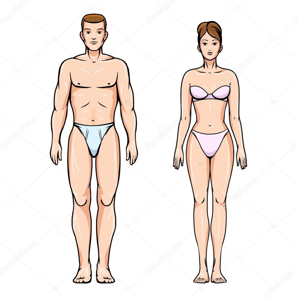 Mann und Frau-gesunder Körper-Zahlen — Stockvektor © MSSA #75534895