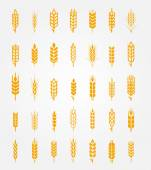 Photo Vector wheat ears icons set