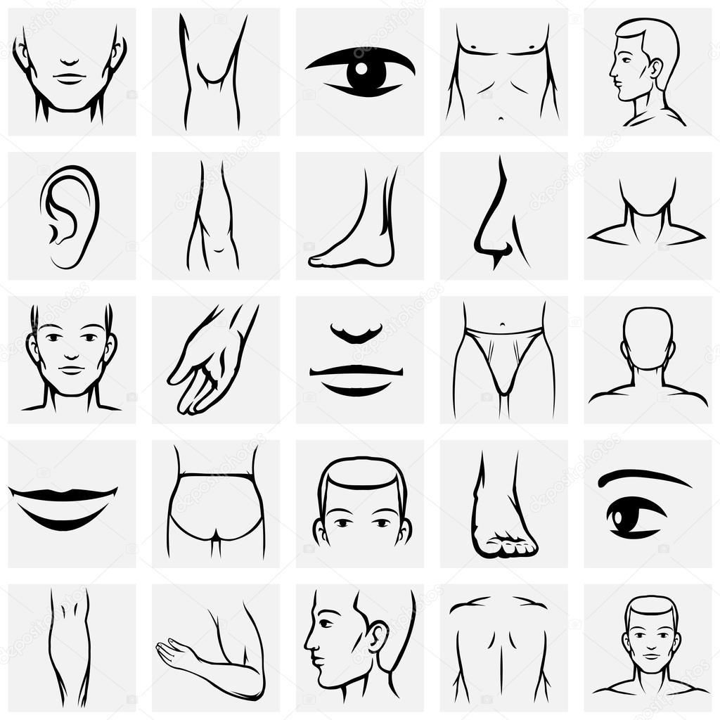 Männliche Körperteile Icons Set — Stockvektor © MSSA #78134462