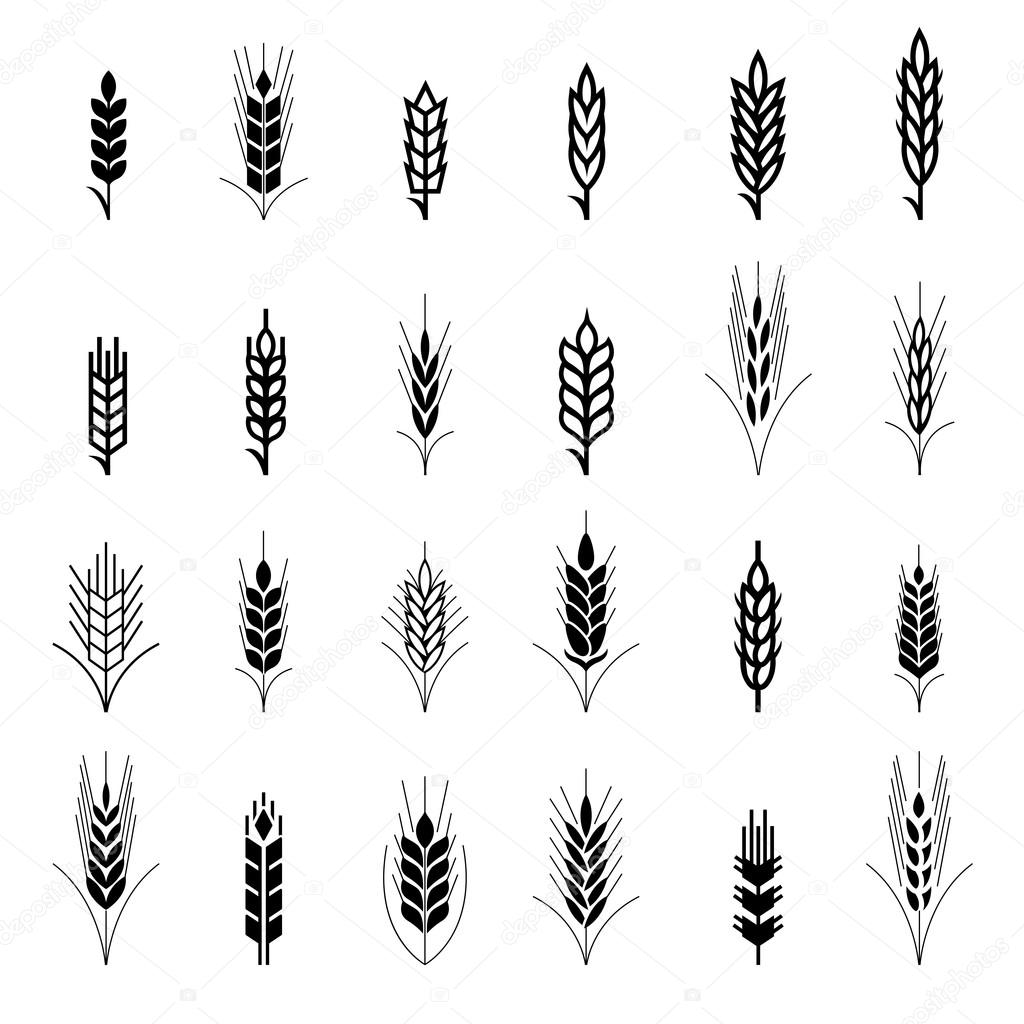 Wheat ear symbols for logo design