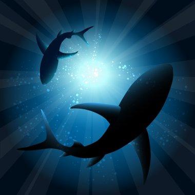 Sharks under water
