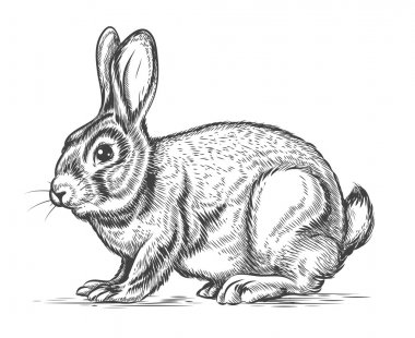 Hand drawn vector rabbit in engraving style