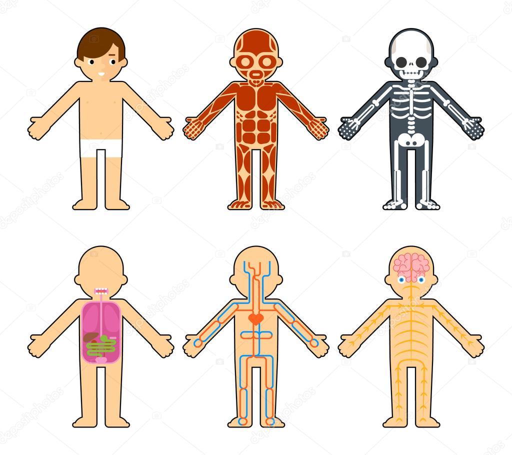 Body Anatomy For Kids Stock Vector Mssa 88195924