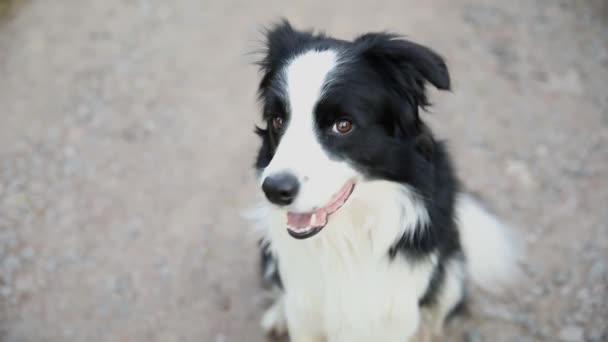 Outdoor-Porträt von niedlichen lächelnden Welpen Border Collie sitzt auf Park Hintergrund. Kleiner Hund mit lustigem Gesicht an sonnigen Sommertagen im Freien. Haustierpflege und lustiges Tierlebenskonzept.
