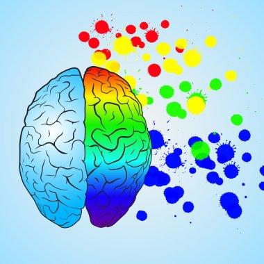 Colored left brain and right brain. Concept.