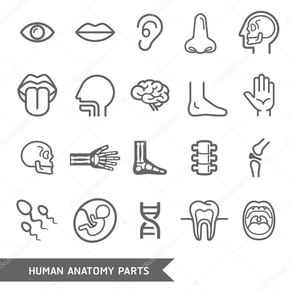 Anatomie des Menschen Körperteile detaillierte Symbole gesetzt ...