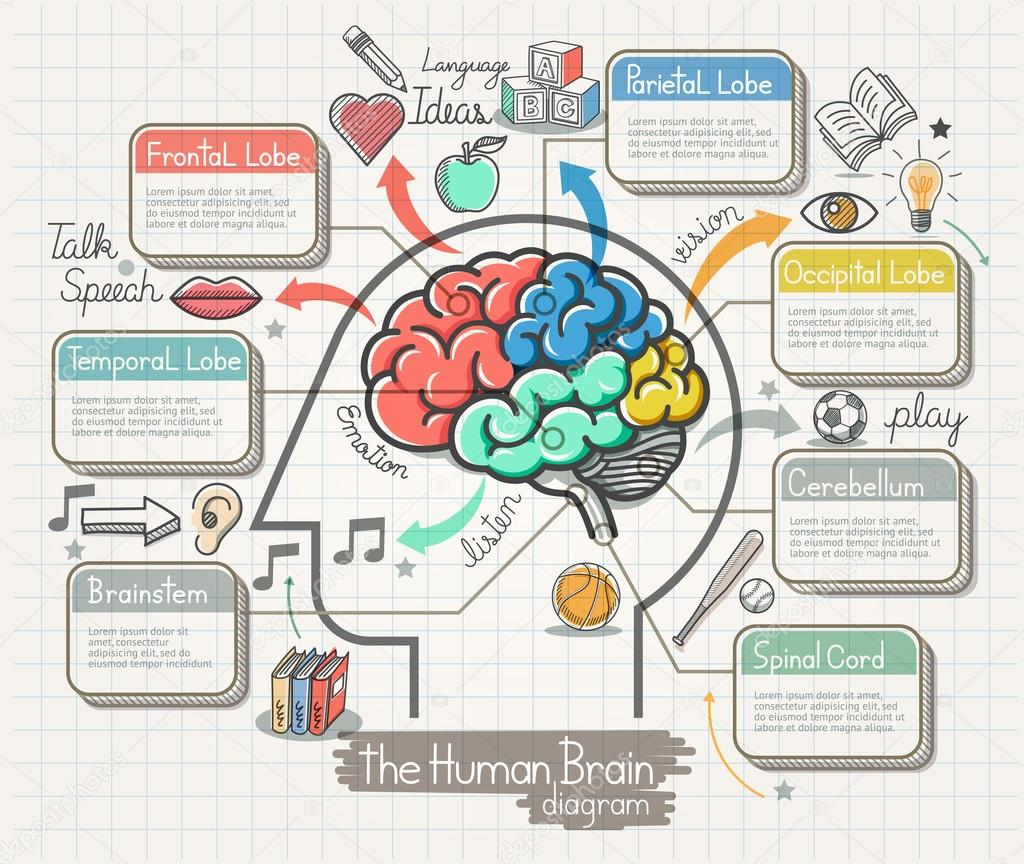 El diagrama del cerebro humano Doodles conjunto de iconos ...