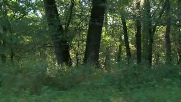 Les v sunrise - steadicam zastřelil