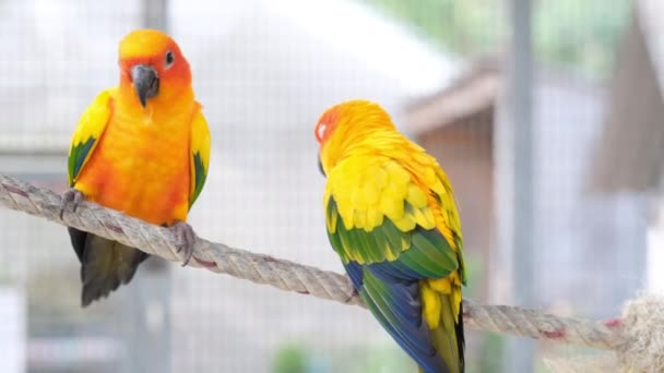 Közelkép Színes pár szerelem madarak kötélen együtt kamera kézi
