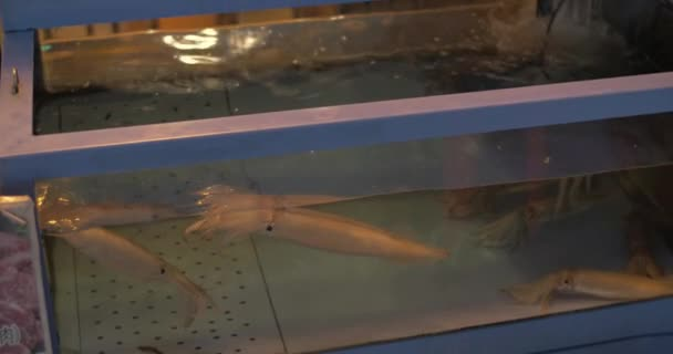 Woman with pad shooting squid and shells store aquarium
