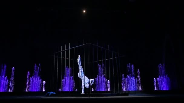 Bilance Master výkon v cirkuse