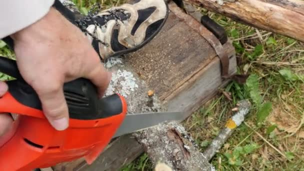 Man Pruning Branch With A Small Saw