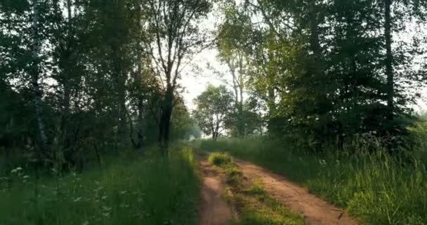 Procházky v lese při západu slunce