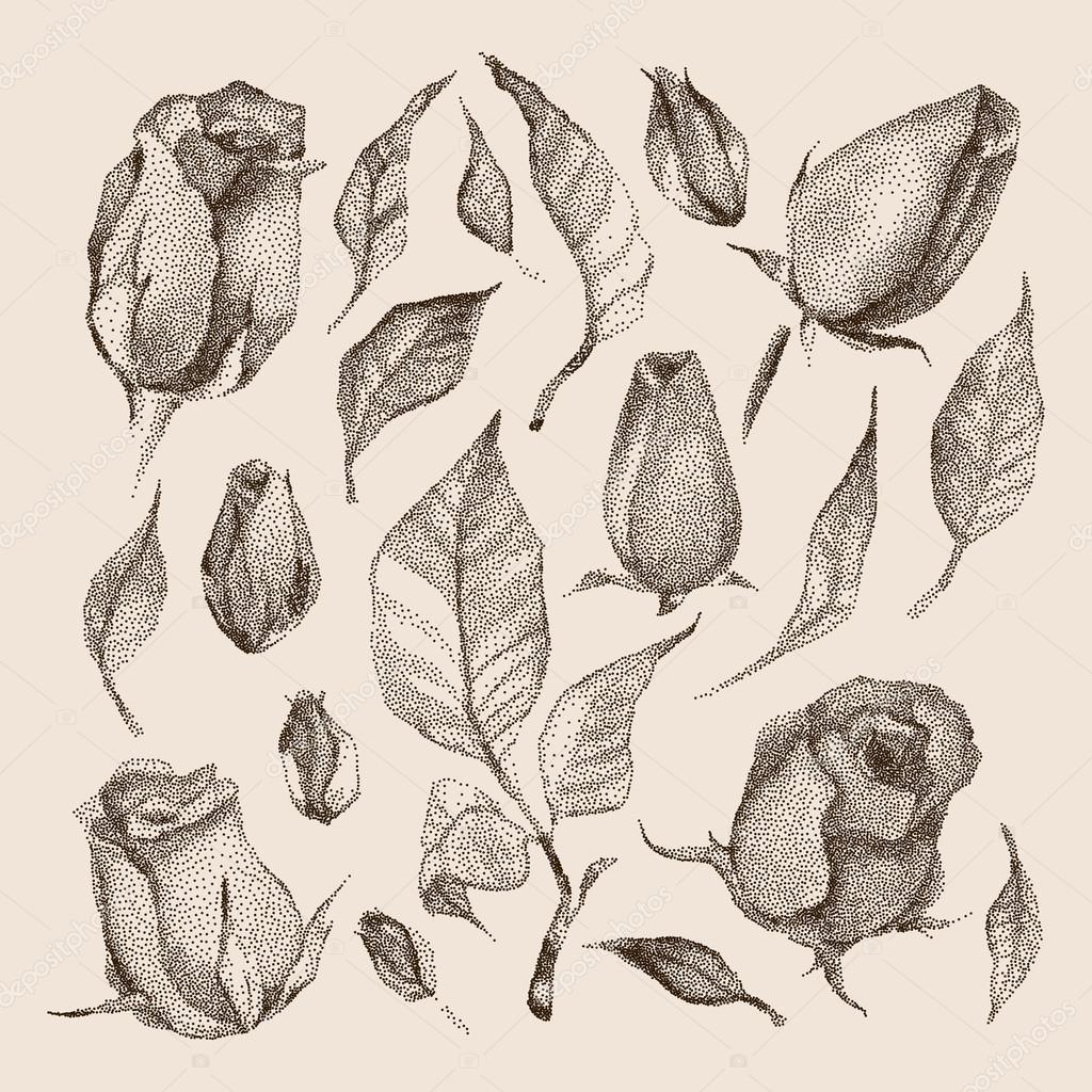 Roses Botanical set.