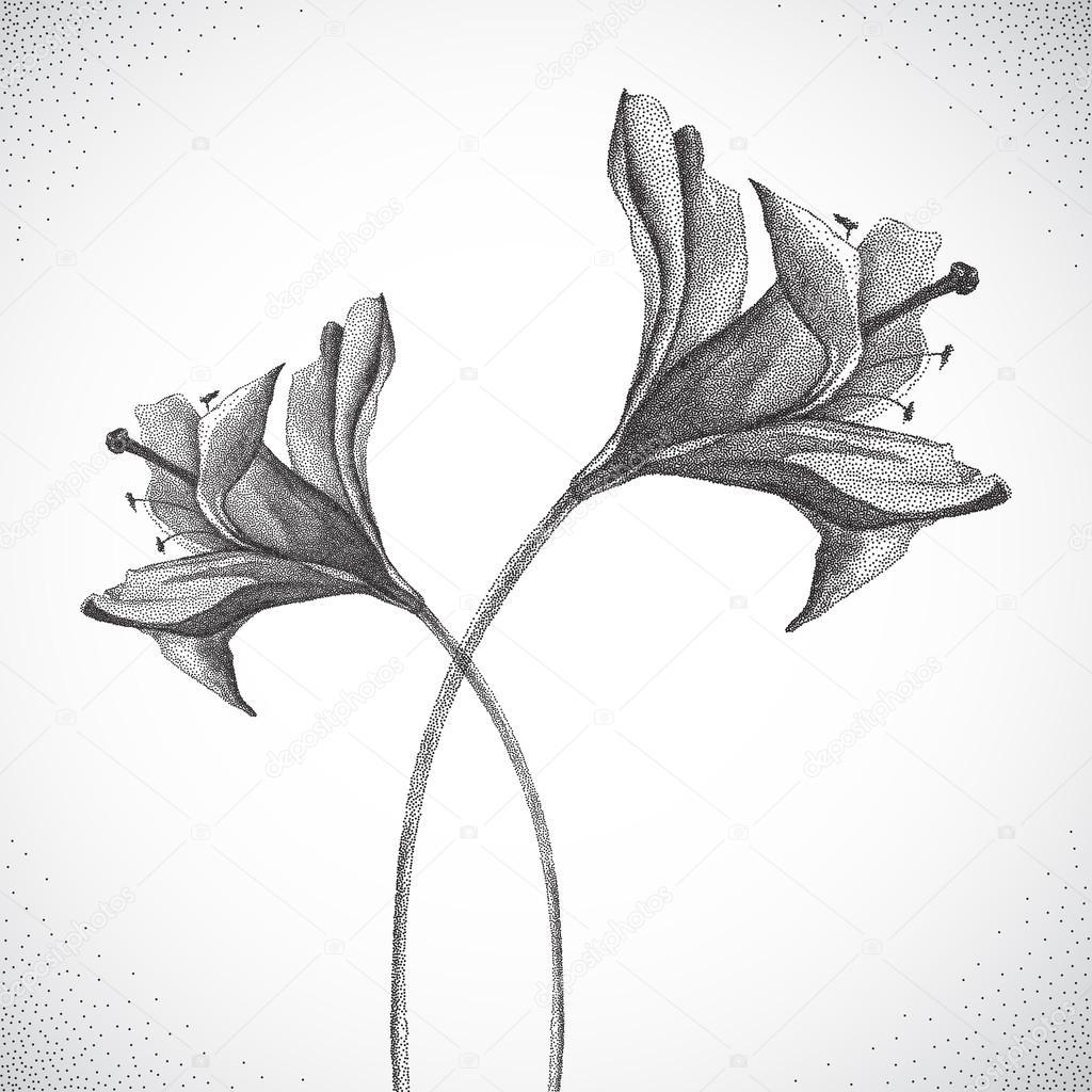 Flower. Black and white Dotwork