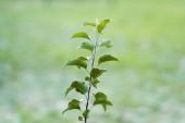 mladá rostlina se zelenými listy rostoucí na rozmazaném pozadí, koncept ekologie