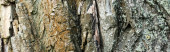 close up view of textured tree bark, ecology concept, banner
