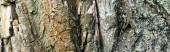 detailní pohled na texturovanou kůru stromů, koncept ekologie, banner