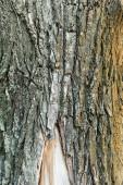 közeli kilátás texturált kéreg öregedő fa, ökológia koncepció