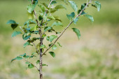 Photo young green plant growing on blurred background, ecology concept