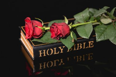 Red roses on holy bible on black background, funeral concept stock vector