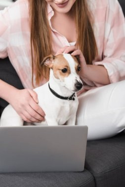 Cropped view of woman petting jack russell terrier near laptop on couch stock vector