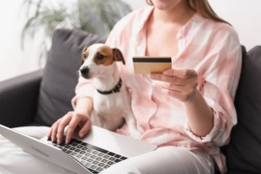 Cropped view of young woman holding credit card near jack russell terrier and laptop while online shopping at home stock vector