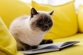 macska ül -on nyitott notebook -on sárga kanapé, elmosódott háttér