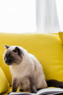 Cat looking away on yellow sofa near open notebook stock vector