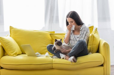 Allergic woman wiping nose with paper napkin while sitting on sofa with cat near laptop stock vector