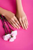 von oben Ansicht der weiblichen Hände mit Nägeln mit glänzendem Emaille in der Nähe von Nelkenblüten auf rosa Hintergrund bedeckt