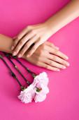 Ansicht von weiblichen Händen mit glänzender Maniküre in der Nähe von Nelkenblüten auf rosa Hintergrund
