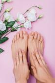vrchní pohled na ženské ruce a nohy s pastelovým lakem na nehty v blízkosti bílého eustomu květiny na růžovém pozadí
