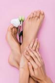 Draufsicht weiblicher Füße und Hände mit pastellfarbenem Emaille auf Nägeln in der Nähe weißer Eustoma-Blume auf rosa Hintergrund