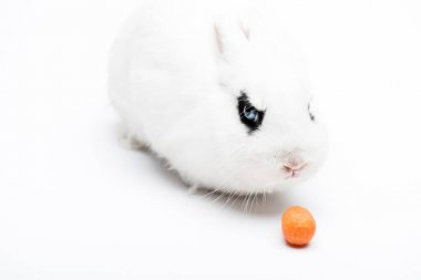Cute rabbit with black eye on white background stock vector
