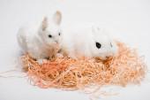 roztomilý králík s hračkou v hnízdě na bílém pozadí