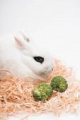 aranyos nyúl fészekben brokkoli fehér háttér