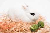 cute rabbit in nest with broccoli on white background