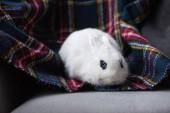 niedliches weißes Kaninchen mit blauem Auge auf karierter Decke