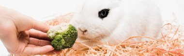 Cropped view of woman giving broccoli to cute rabbit in nest on white background, banner stock vector