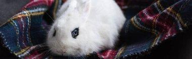 Cute white rabbit with black eye on checkered blanket, banner stock vector